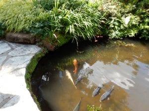 WaterLaw larger koi pond image